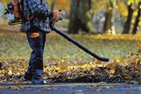Fall-Clean-Up-Carlos-Martin