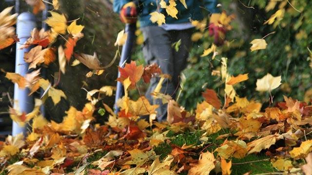 Fall-Clean-Up-Carlos-Martin-2