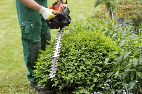 Landscape-Maintenance-Carlos-Martin-2