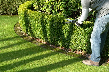 Landscape-Maintenance-Carlos-Martin-3